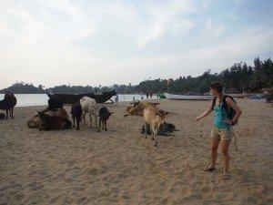 Clo et les vaches sacrees
